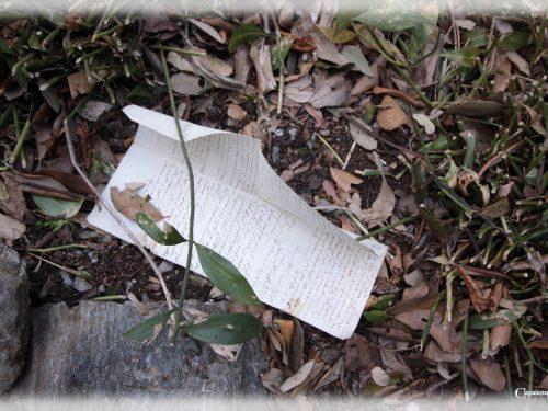 Le poesie nel parco di Villa Duchessa di Galliera